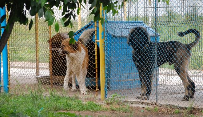 Foto: A început campania de sterilizare gratuită a animalelor fără stăpân din Mangalia