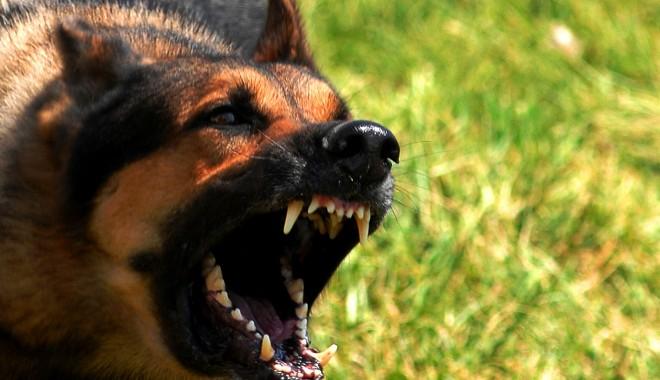 Foto: Uitare şi nepăsare. Ce se întâmplă cu câinii maidanezi?