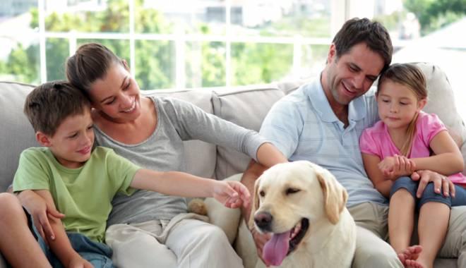 """Foto: O decizie-surpriză în cazul scandalului """"Câini de apartament"""""""