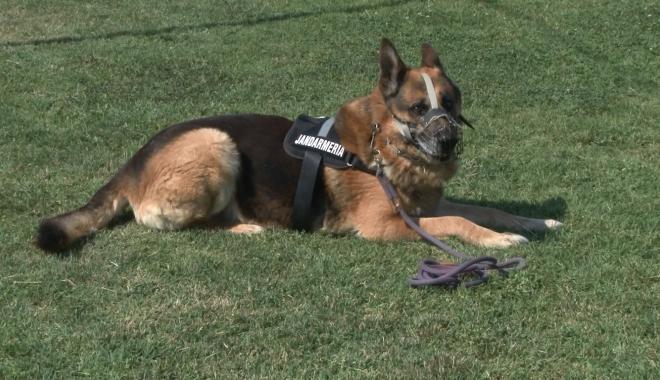 Foto: Guvernul SUA va dona Jandarmeriei Române patru câini specializaţi în detectarea explozibililor