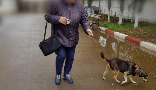 Foto: V-a fost luat câinele? Aşa îl puteţi revendica