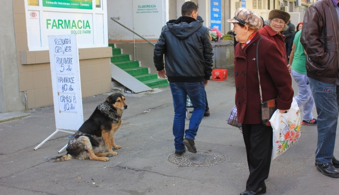 Foto: CÂT COSTĂ SĂRĂCIA ÎN CONSTANŢA? 100 milioane lei pentru un oraş de asistaţi social