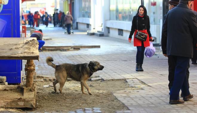 Foto: Maidanezii s-au reîntors în cartiere. Primăria Constanţa nu cade la pace cu iubitorii de animale