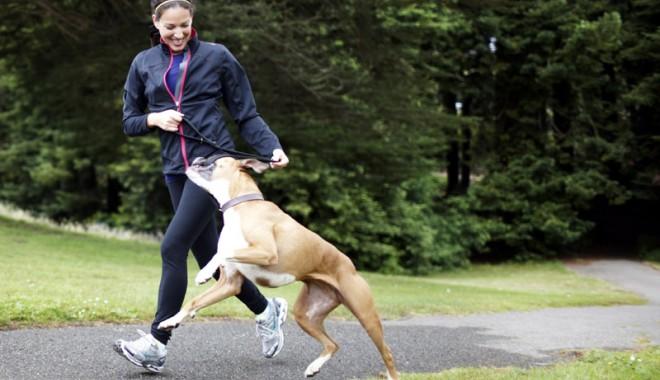 Foto: Cât te costă şi cum îţi poţi asigura câinele sau pisica