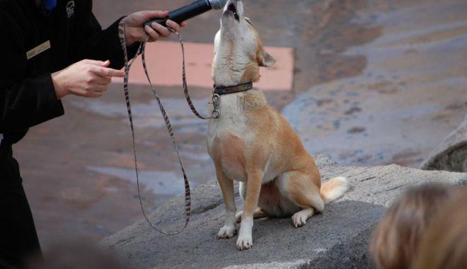 Câinele şi lăutarul - cainelesilautarul-1531139096.jpg