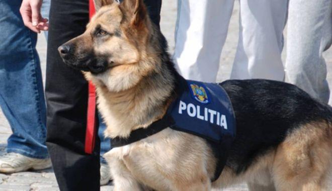 Animalele de serviciu care au aparținut instituțiilor publice vor beneficia de îngrijire pe viață - cainepolitist-1571134952.jpg