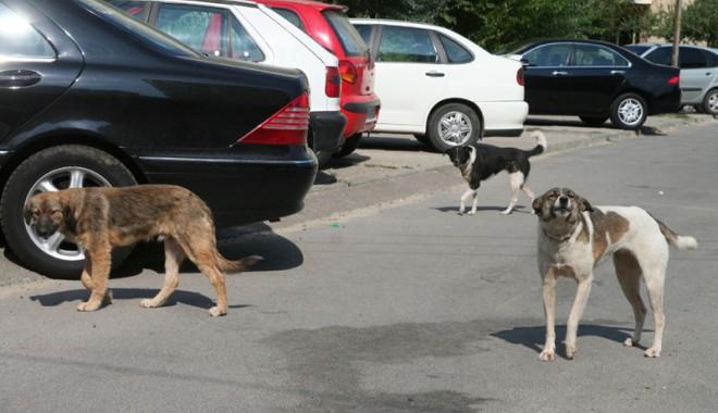 Foto: Maidanezii stăpânesc Constanţa. Cum să ne apărăm de atacurile câinilor!