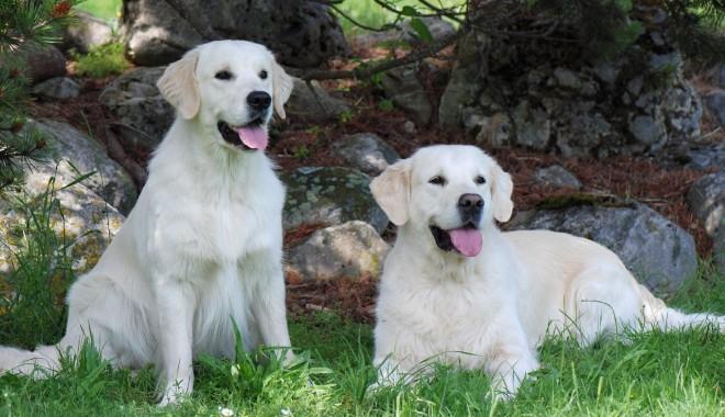 Foto: De ce câinii sunt mai buni decât oamenii