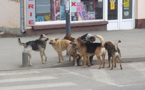 Foto: Curtea Constituţională amână luarea unei decizii privind Legea câinilor fără stăpân