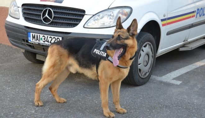 Câini de poliţie, scoşi la vânzare - caini-1475417217.jpg