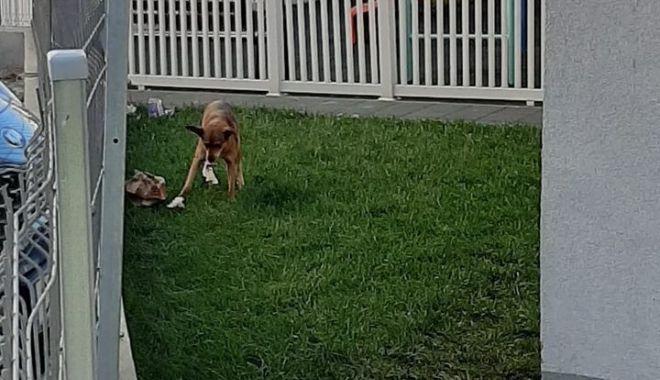 Câinii maidanezi au început să frecventeze locurile de joacă.