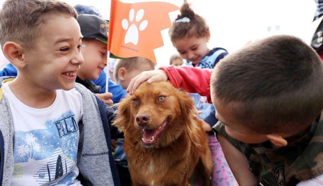 Foto: Problema câinilor maidanezi, rezolvată cu umanitate, la Agigea