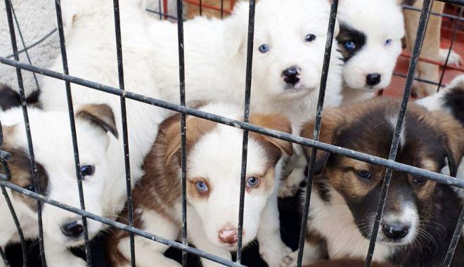 Ce se întâmplă cu câinii comunitari din Constanța. Anunț de la Primărie - cainicomunitari-1573477914.jpg
