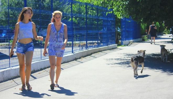 Invazia maidanezilor la Constanţa. Câinii fără stăpân terorizează cartiere întregi - cainicomunitari1-1468945750.jpg