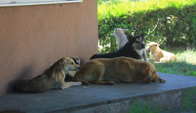 Invazia maidanezilor la Constanţa. Câinii fără stăpân terorizează cartiere întregi - cainicomunitari4-1468945782.jpg