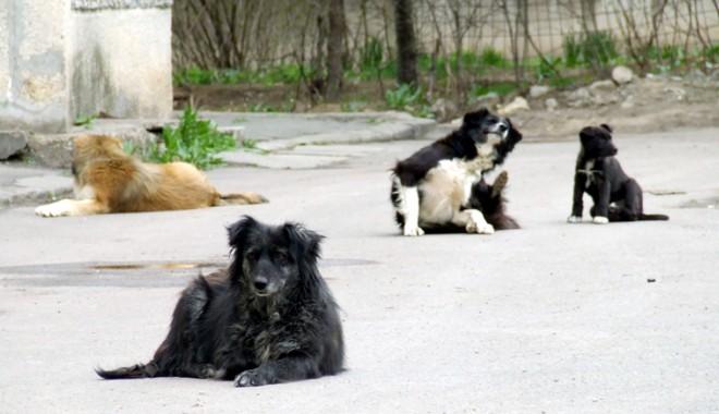 """Foto: E oficial! Iată cum vom scăpa de câinii maidanezi. """"Moartea se instalează subit"""""""