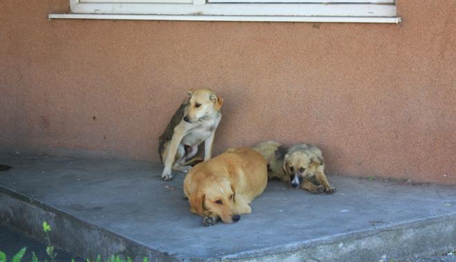 Invazia maidanezilor la Constanţa. Câinii fără stăpân terorizează cartiere întregi - cainicomunitari5-1468945791.jpg