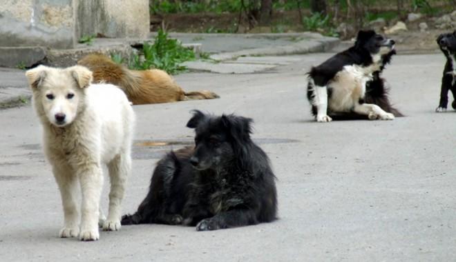 Primăria Năvodari, o nouă strategie pentru problema câinilor fără stăpân