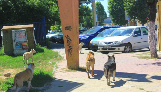 Invazia maidanezilor la Constanţa. Câinii fără stăpân terorizează cartiere întregi - cainicomunitari6-1468945798.jpg