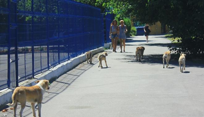 Invazia maidanezilor la Constanţa. Câinii fără stăpân terorizează cartiere întregi - cainicomunitari7-1468945805.jpg