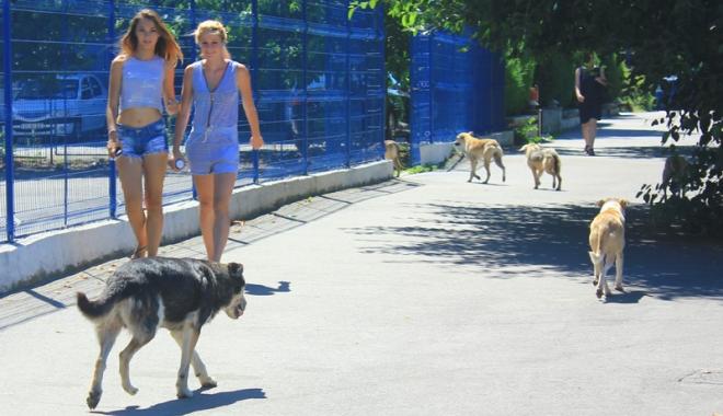 Foto: Invazia maidanezilor la Constanţa. Câinii fără stăpân terorizează cartiere întregi