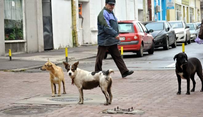 Foto: Constanţa mai are 1.550 de câini maidanezi. Unde a dispărut restul de 14.000?