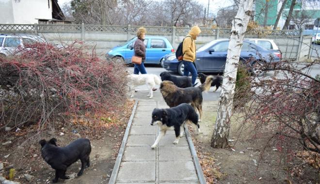 Foto: Adio maidanezi de pe străzile Constanței! Cât plătește primăria pentru câinii comunitari