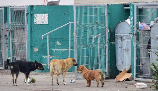 Teroare din cauza câinilor comunitari.