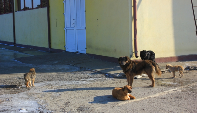 Foto: Câinii comunitari au reapărut prin cartiere.  Primarul Constanţei promite un nou adăpost modern