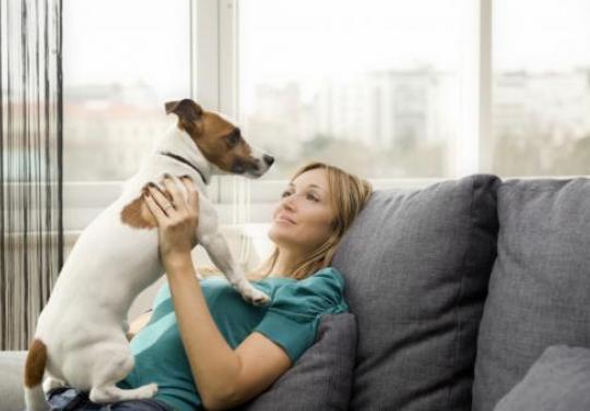 Foto: Regulament/ Câţi câini pot locui într-un apartament din Năvodari