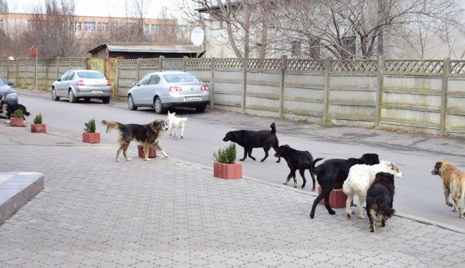 Foto: Câinii din Constanța, în atenția USR. Poate Primăria Constanța să-i sterilizeze gratuit?