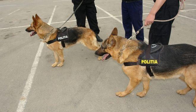 Foto: Pensie pentru câinii şi caii din MAI şi MApN!
