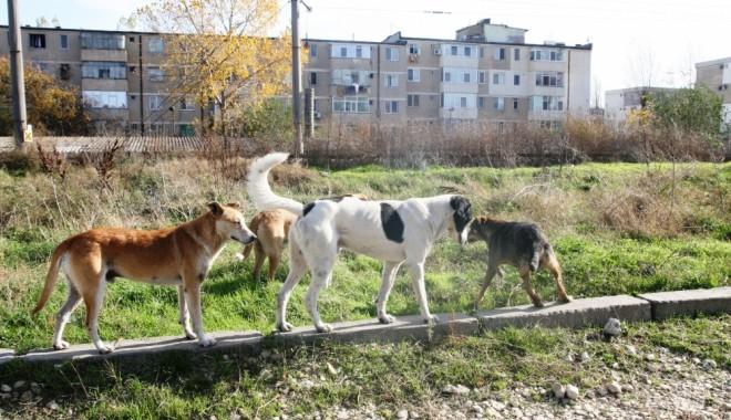 Foto: Săptămâna viitoare se vor relua dezbaterile la proiectul de lege privind câinii comunitari