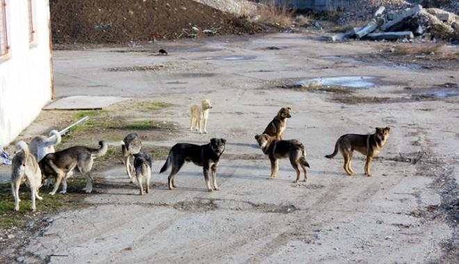 Foto: Câinii comunitari nu mai pot fi eutanasiaţi. Cum scăpăm însă de ei?