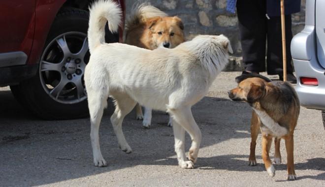 Foto: Câinele UCIGAŞ aparţine unui ONG