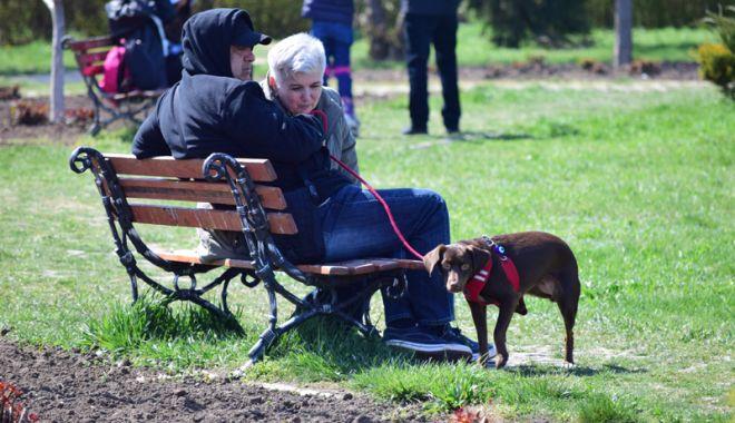 Mizerie şi lipsă de educaţie! Constanţa,  plajele, parcurile - pline de rahaţi de câine - cainiparctabacarie2-1535648832.jpg