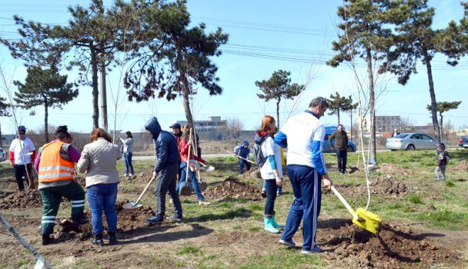 Foto: Primăria Municipiului Constanța continuă plantările de primăvară!