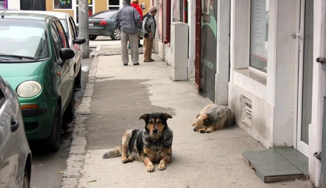 Foto: CE FACEM CU MAIDANEZII DIN CONSTANŢA? Când începe adopţia câinilor