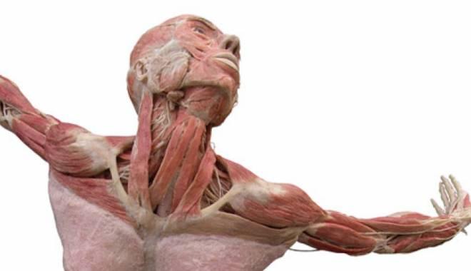 Foto: Prima expoziţie permanentă a unor corpuri umane disecate şi plastifiate