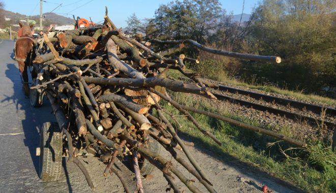 Foto: DOSARE PENALE LA CONSTANŢA! Indivizi prinşi la furat de lemne