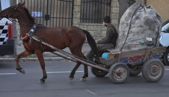Foto: Circulaţia vehiculelor cu tracţiune animală din Medgidia, în atenţia Poliţiei Locale