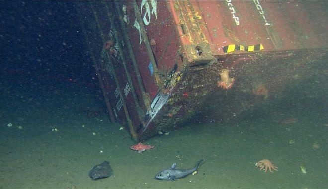 Câte containere încărcate cu mărfuri ajung pe fundul mărilor și oceanelor? - catecontainerecumarfuriajungpefu-1547216531.jpg