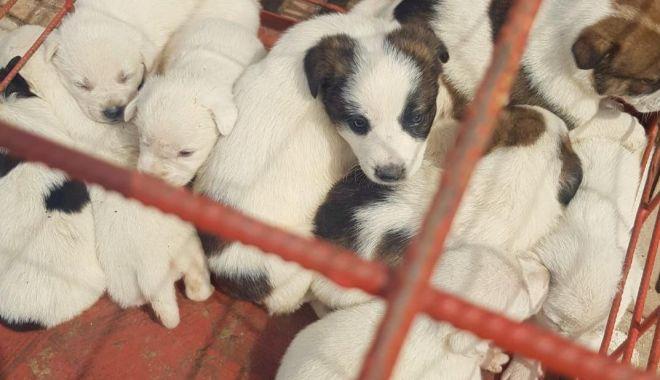 Foto: Ce acte îţi trebuie ca să adopţi un căţel de la Adăpostul Constanţa