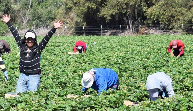 Foto: Ce locuri de muncă li se oferă şomerilor peste hotare
