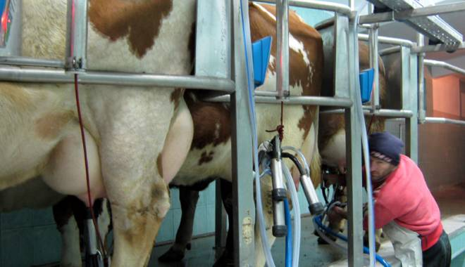 Foto: Ce soluţii propune Pro Agro pentru relansarea zootehniei