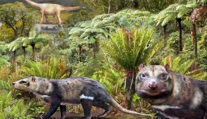 Agerpres: Fosile ale unei noi specii de mamifer, care a trăit în urmă cu 72 de milioane de ani, descoperite în Chile - chile12-1617866458.jpg