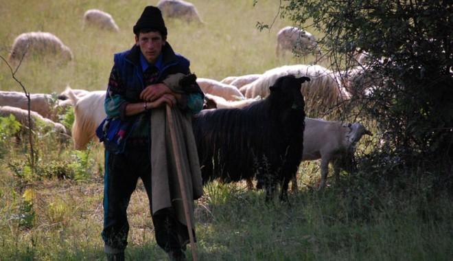 Ciobanul cu chef de sex