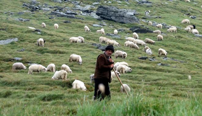 Foto: Ciobani filozofi