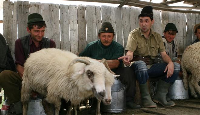 Ciobanu' şi oaia vagaboandă