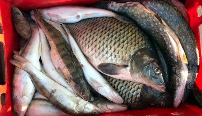 """Foto: """"Comercianţii"""" de peşte, în vizorul jandarmilor"""